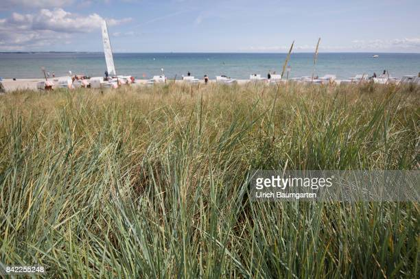 Summer holidays and beach holidays in Scharbeutz at the Baltic Sea beach chairs Dune grass for dyke protection