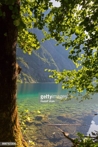 Summer idyllic scenery, lake Obersee, Berchtesgaden