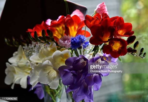 summer in a vase - freesia stock pictures, royalty-free photos & images