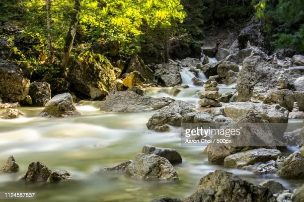 Summer In Alpine Stream