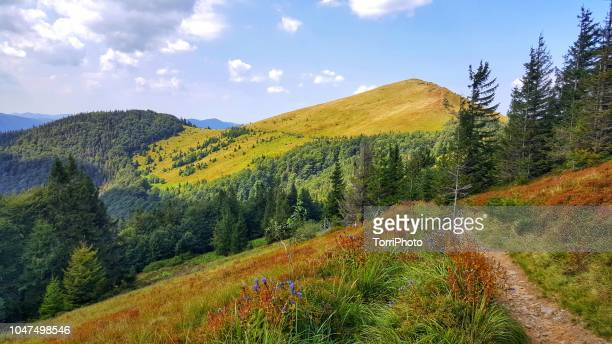 Summer in Carpathians mountains