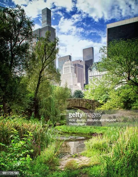 summer in central park with gapstow bridge - central park fotografías e imágenes de stock