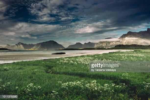 summer in lofoten islands, norway - norden stock-fotos und bilder