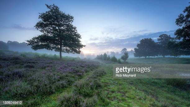 summer in lord piece common, south downs, sussex, uk - national wildlife reserve stock pictures, royalty-free photos & images