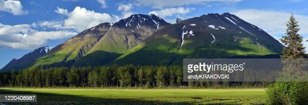 sommer in den kenai mountains, alaska - erle stock-fotos und bilder