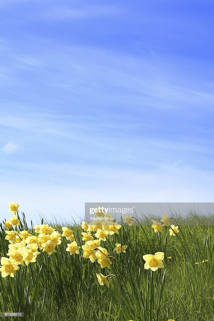 Summer Is Coming : Stock Photo