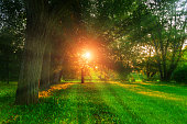Summer landscape - colorful summer city park with deciduous green trees in sunny evening. Summer park trees