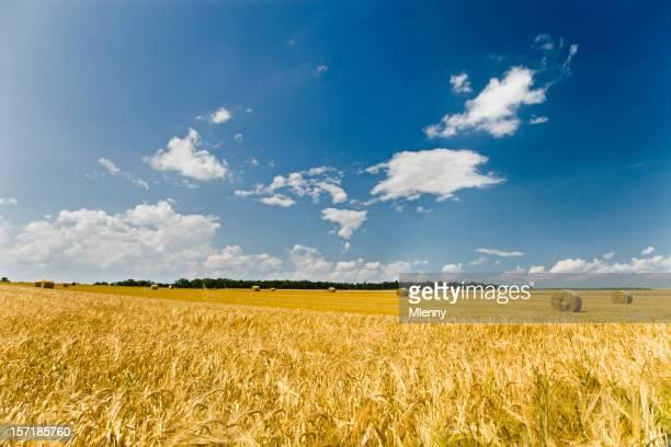 Summer Landscape Harvest