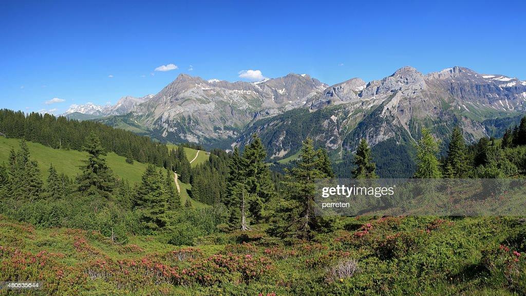 Summer landscape near Gstaad : Stock Photo