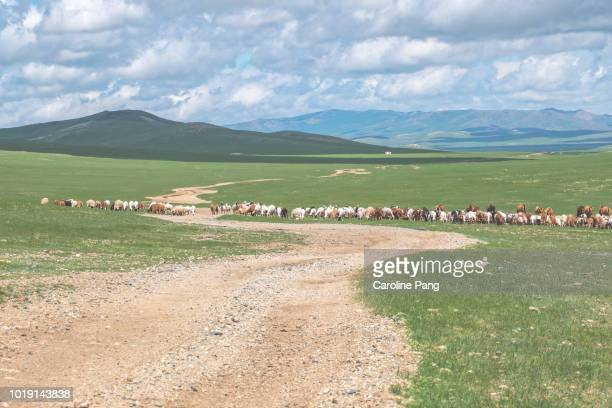 Summer landscape of the steppes of Mongolia. Nomads are herding their livestock to a water source and green pasture for feeding.