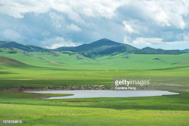 Summer landscape of the steppes of Mongolia with lakes filled with water and domesticated animals feeding in the green pastures.