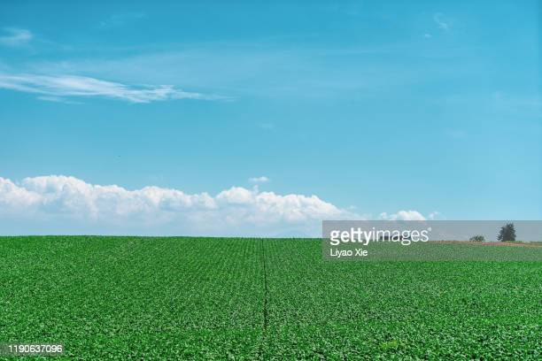 summer landscape - liyao xie stock pictures, royalty-free photos & images