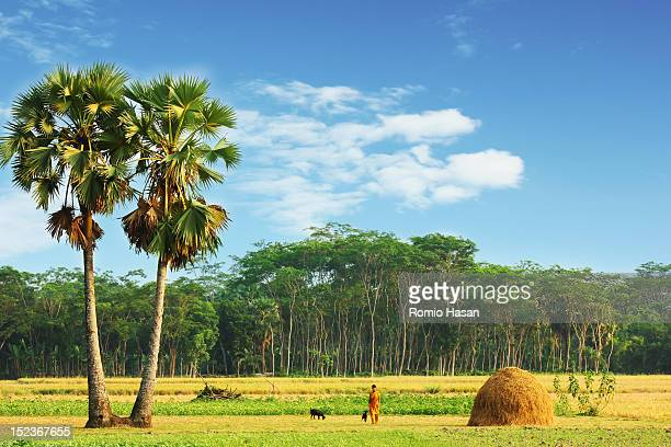 summer landscape - bangladesh village stock photos and pictures