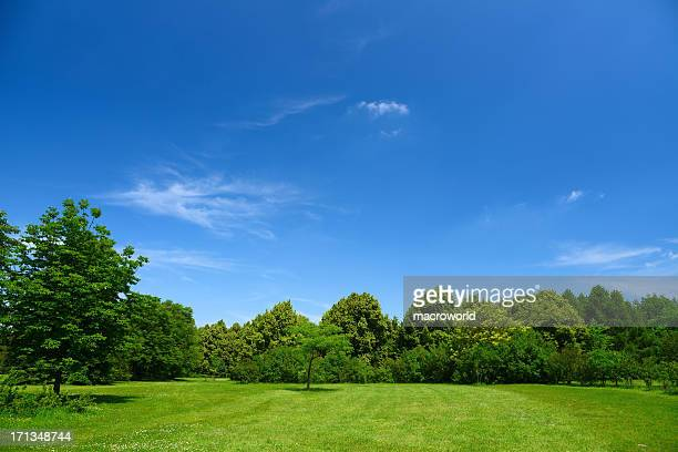 summer landscape - clear sky stock pictures, royalty-free photos & images