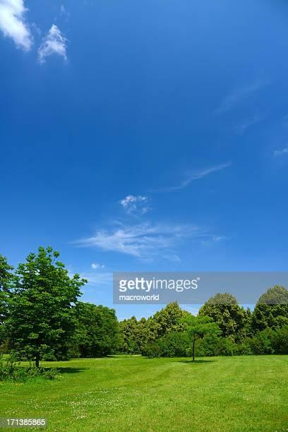 夏の風景 - 縦位置 ストックフォトと画像