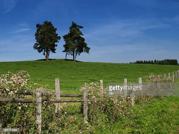 "summer landscape - ""sjoerd van der wal"" or ""sjo"" stock pictures, royalty-free photos & images"