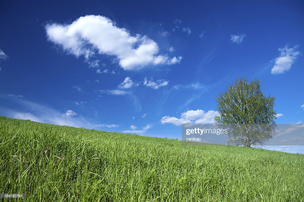 Summer landscape : Stock Photo