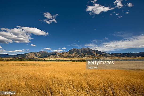 summer landscape with a golden grass field - moody sky stock pictures, royalty-free photos & images