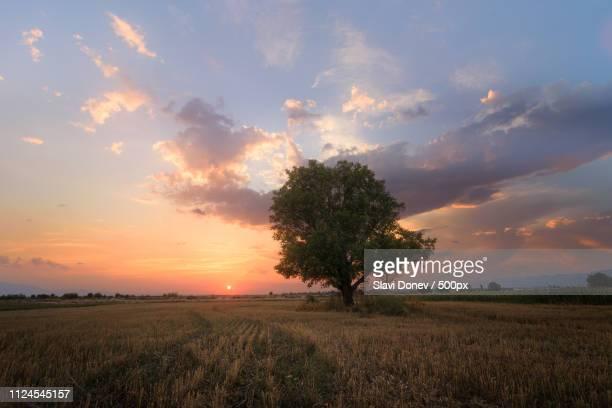 summer light - posbank ストックフォトと画像