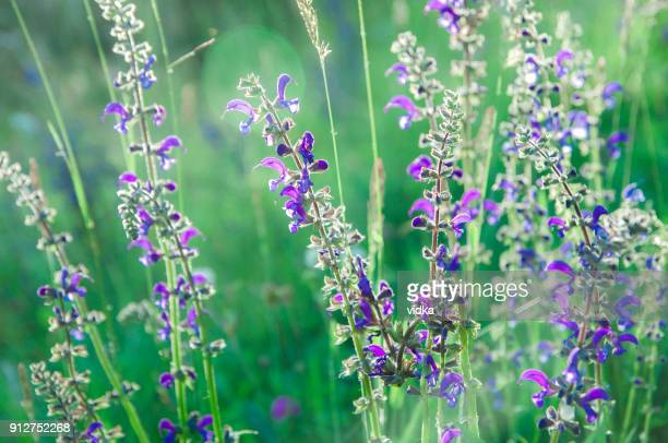 Summer meadow: blades of grass and wildflowers