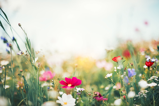 Summer Meadow 1089974972