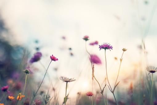 Summer Meadow 1125637203