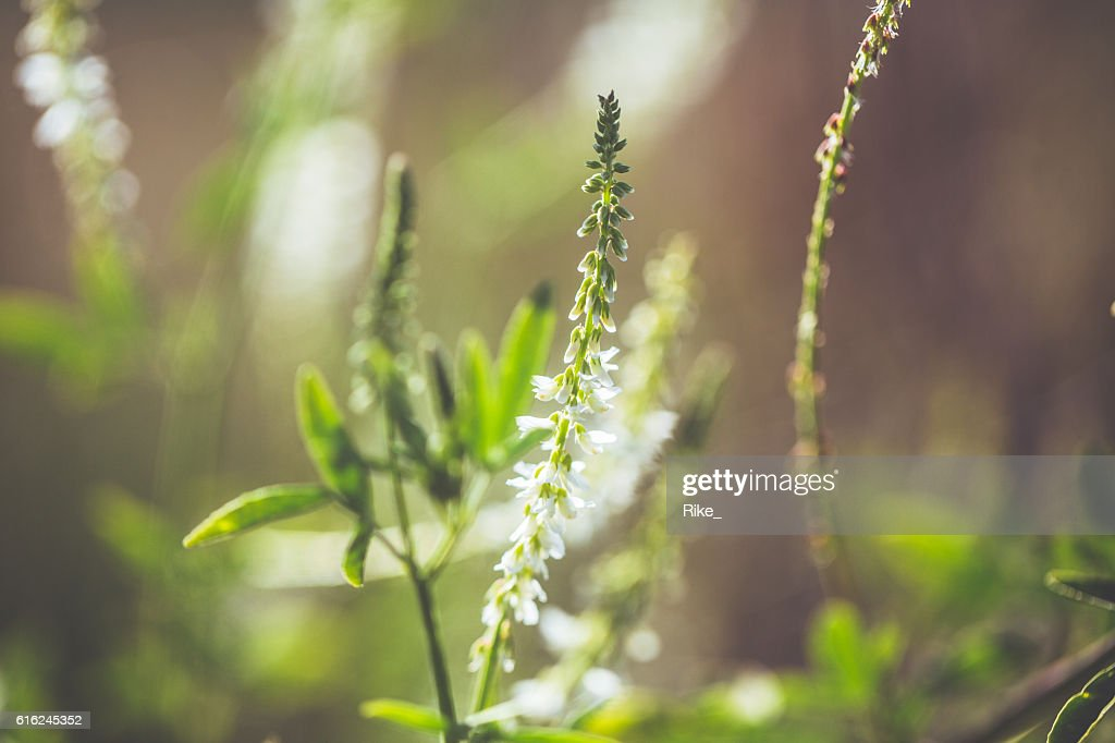 Summer meadow : Stock Photo