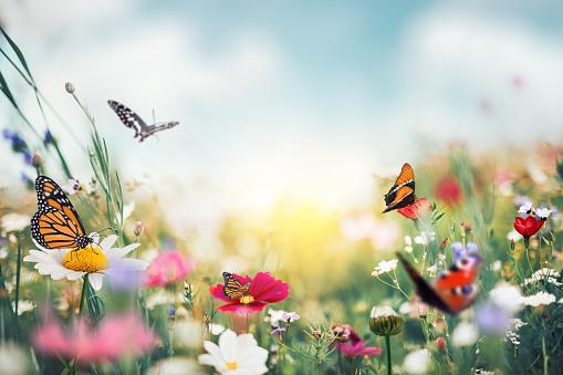 Summer Meadow With Butterflies 1201252143