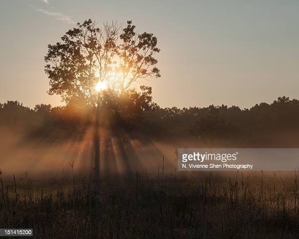 summer mist - レイクフォレスト ストックフォトと画像