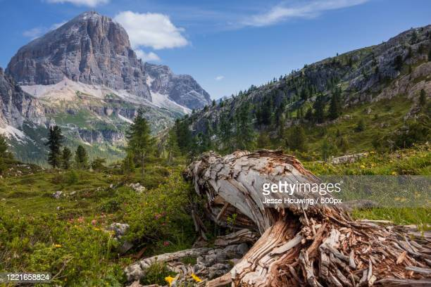 summer mountain landscape - jesse stock pictures, royalty-free photos & images