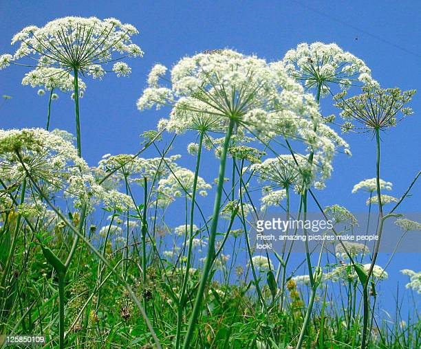 Summer nature flowers