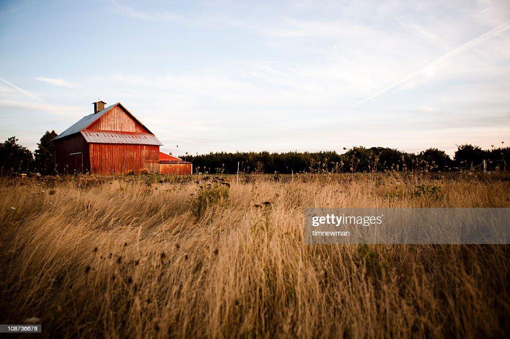 Summer night barn : Stock Photo