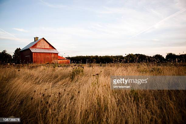 Summer night barn