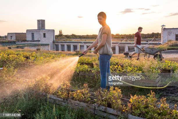 summer: on the roof top garden young adults watering plants - urban garden stock pictures, royalty-free photos & images