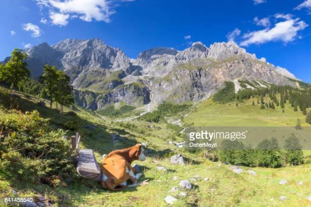 summer panoramic view of hochkönig - mandlwände -  alps - bischofshofen stock photos and pictures