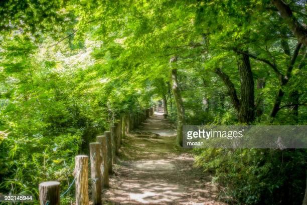 summer path - 神戸市 ストックフォトと画像