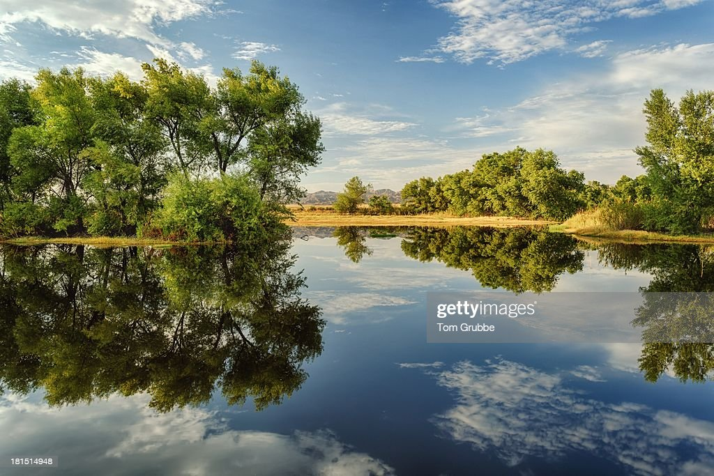 Summer Pond : Stock Photo