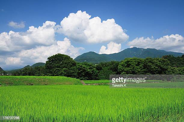 summer scene - satoyama scenery stock pictures, royalty-free photos & images