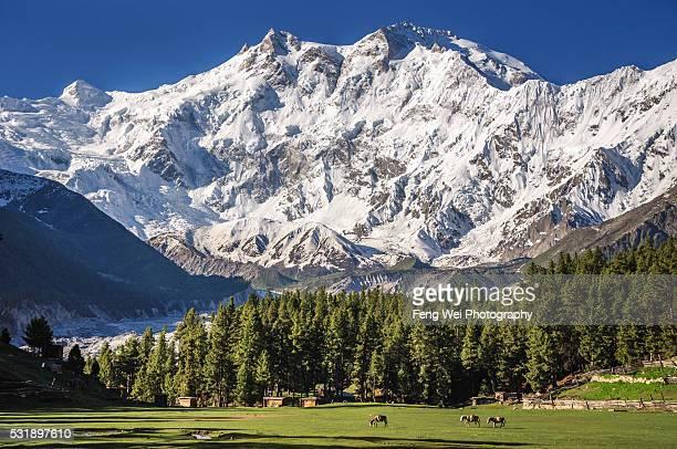 Summer Scenery at Fairy Meadows, Gilgit-Baltistan, Pakistan