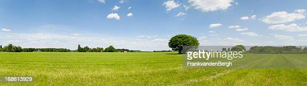 summer scenic panorama - panoramic stock pictures, royalty-free photos & images