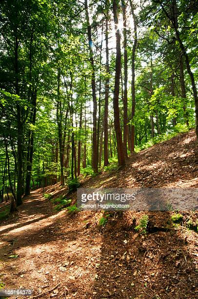 summer shadows, halifax, west yorkshire, england - simon higginbottom stock pictures, royalty-free photos & images