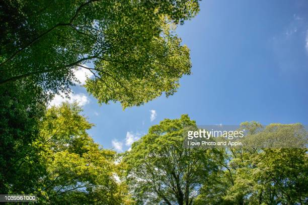 summer sky looking up from the shade of trees - low angle view stock pictures, royalty-free photos & images