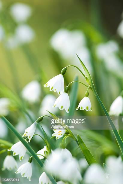 Sommer Blumen-ich Schneeflocken