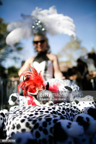 Summer Strand and her dog April Moon attend the 27th Annual Tompkins Square Halloween Dog Parade in Tompkins Square Park on October 21, 2017 in New...