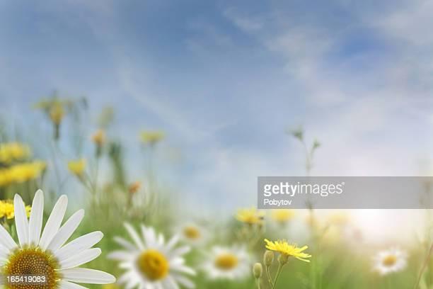 Coucher de soleil dans le champ de l'été