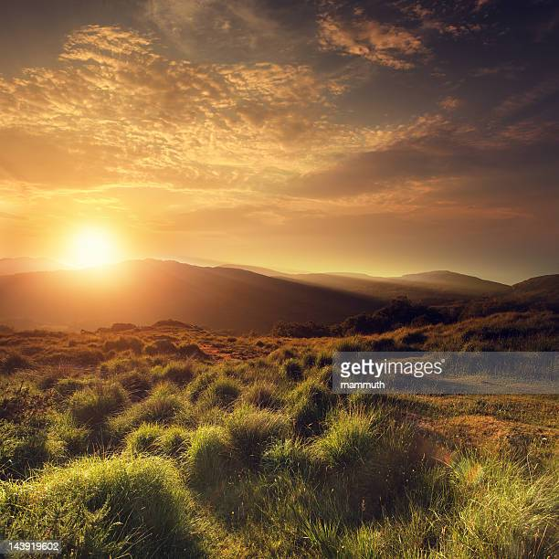 summer sunset - tranquil scene stock pictures, royalty-free photos & images