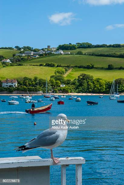 Summer time in Salcombe