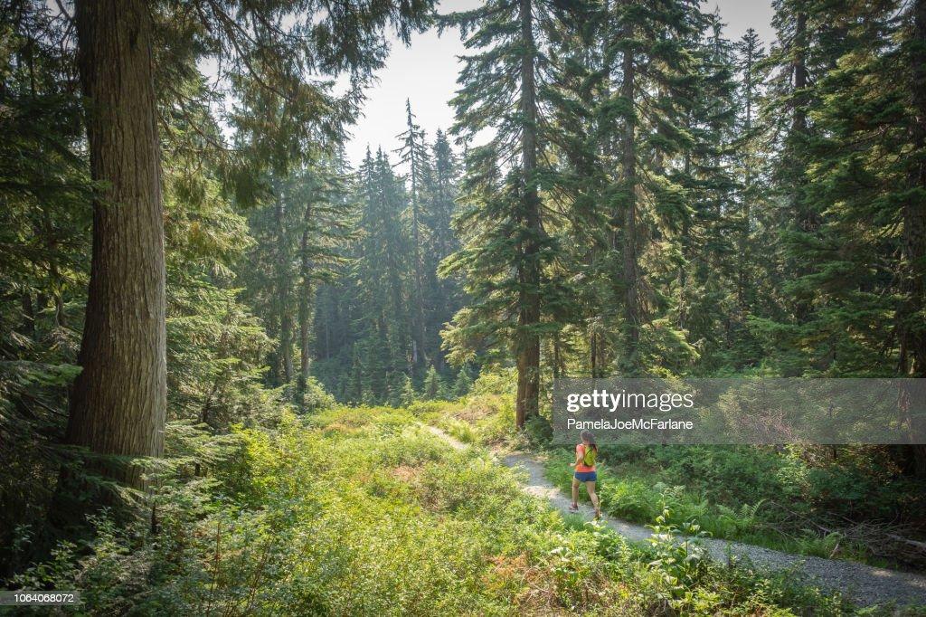 Summer Trail Running, Mount Seymour, North Vancouver, British Columbia, Canada : Stock Photo