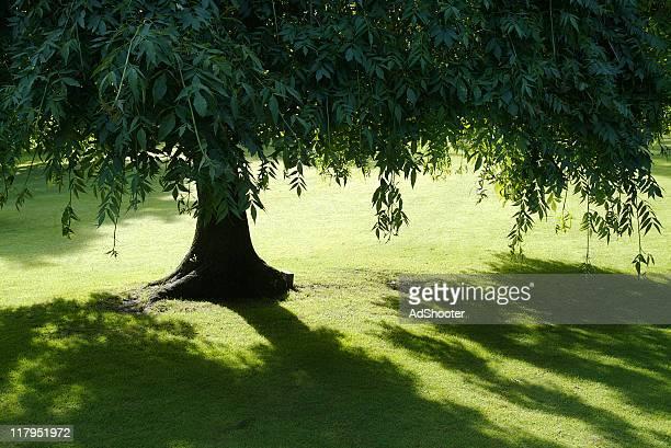 Été tree