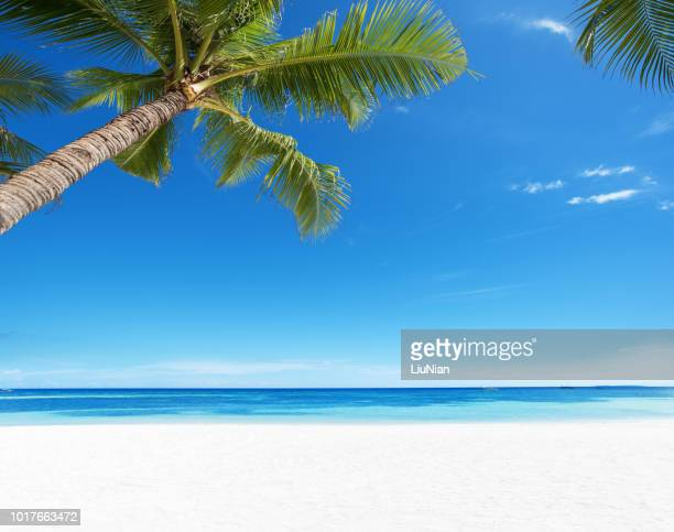 summer tropical paradise beach background - perfection stock pictures, royalty-free photos & images